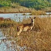 Deer The Point Hatteras Nc 2 12/5 Art Print