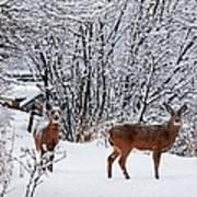 Deers In Winter Art Print