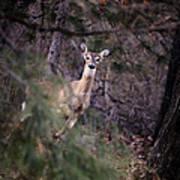 Deer's Stomping Grounds. Art Print