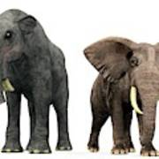 Deinotherium And Elephant Compared Art Print