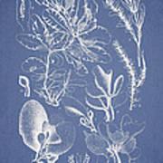 Delesseria Middendorfii Art Print by Aged Pixel