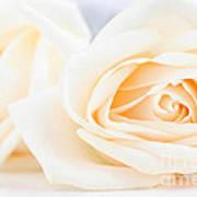 Delicate Beige Roses Art Print