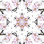 Delicate Cherry Blossom Fractal Kaleidoscope Art Print