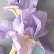 Delicate Dance Of The Iris Flower Art Print