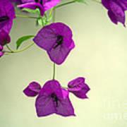 Delicate Flowers Pretty In Pink Print by Natalie Kinnear