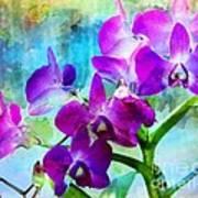 Delicate Orchids Art Print