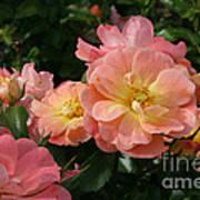 Delicate Pink Roses Art Print