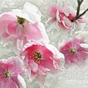 Delicate Tree Peonies Branching Out Art Print