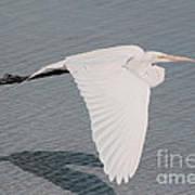 Delicate Wings In Flight Art Print
