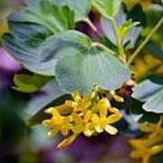 Delicate Yellow Flowers Art Print