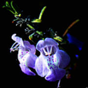 Delicately Purple Art Print