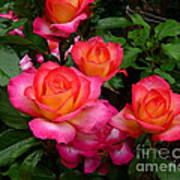 Delicious Summer Roses Art Print