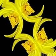 Delightful Daffodil Abstract Art Print