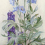 Delphiniums Art Print by James Valentine Jelley