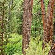 Dense Forest View Art Print