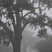 Dense Morning Fog In Oaks Art Print
