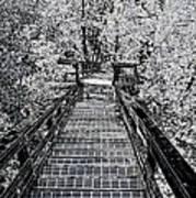 Descent Into The Wilderness Art Print