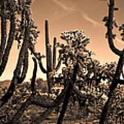 Desert At Dusk Art Print