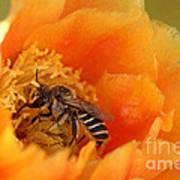 Desert Bee Art Print