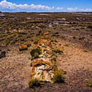 Desert Log Art Print