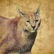 Desert Lynx Art Print