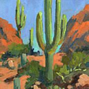 Desert Morning Saguaro Art Print