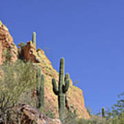 Desert Plants Of The Superstitions Art Print