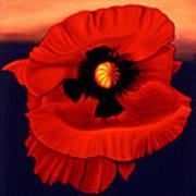 Desert Poppy Art Print