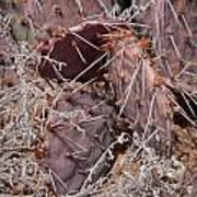 Desert Prickly Pear Cactus Art Print