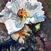 Desert Prickly Poppy Art Print