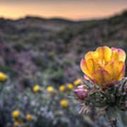 Desert Sunset Blossom Art Print