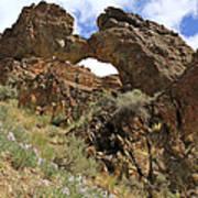 Desert Wildflowers Grand Arch  Art Print