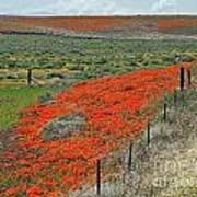 Desert Wildflowers Art Print
