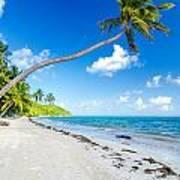 Deserted Beach And Palm Trees Art Print