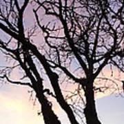 Deserted Tree Art Print