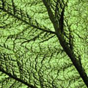 Design In Nature Art Print