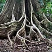 Detail Tree Roots Rain Forest Art Print