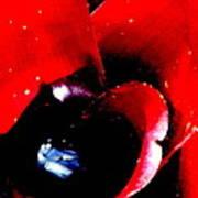 Devilish Eye Of The Bromeliad Art Print