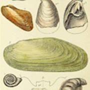 Devonian Fossils, Illustration Art Print