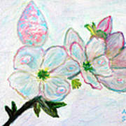 Dew And Smell Of Almond Flowers Art Print
