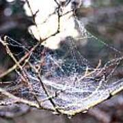 Dew Covered Spiderweb Art Print by Julie Cameron