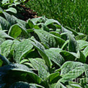 Dew Kissed Foliage Art Print