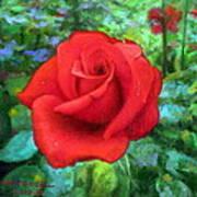 Dew Soaked Rose Art Print