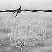 Dewdrops Art Print