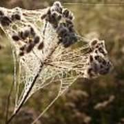 Dewdrops On A Web Art Print