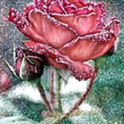 Dewey Rose Art Print