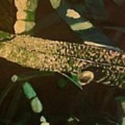 Dewy Blade Art Print