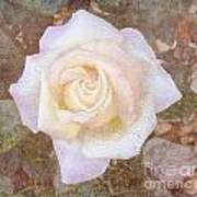 Dewy Dawn Peace Rose Art Print