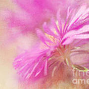 Dewy Pink Asters Art Print by Lois Bryan