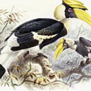 Dichocerus Bicornis Art Print